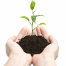 Your marketing efforts are like planting seeds; both take time to grow