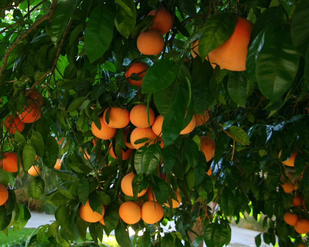 Stay in touch with your low hanging fruit to attract clients