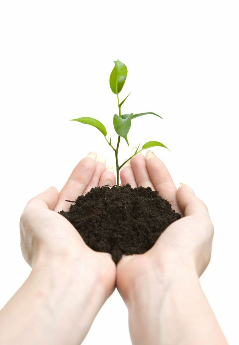 Your marketing is like planting seeds; both take time to grow